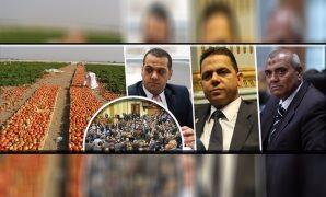 البرلمان يبارك تصدير الطماطم